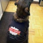 My dog Finn sporting his Cheese & Burger Society shirt